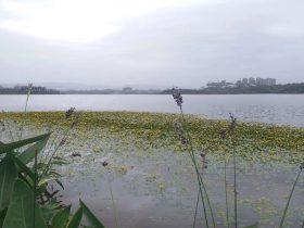 興隆湖濕地公園-四川成都
