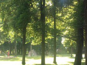 金沙夏の朝-世界環境日-金沙遺跡博物館-金沙考古遺跡公園