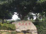 妙覚蓮池-大仏禅院-峨眉山市-楽山市