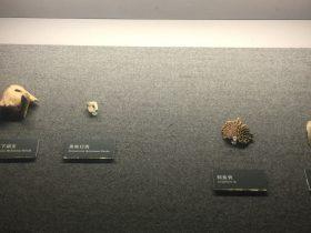 黑熊下頜支-黑熊臼歯-鱘魚骨-魚鰓蓋骨-展示ホール1-昔日の郷里-金沙遺跡博物館-成都市