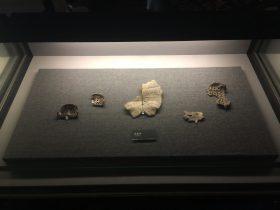 亀復甲-展示ホール1-昔日の郷里-金沙遺跡博物館-成都市