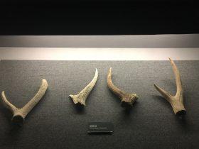 斑鹿角-展示ホール1-昔日の郷里-金沙遺跡博物館-成都市