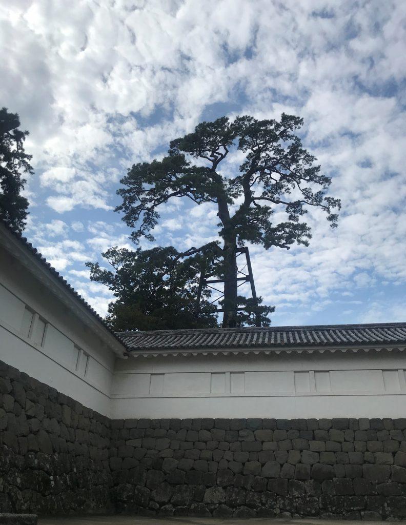 常盤木門-小田原城-小田原市-神奈川県