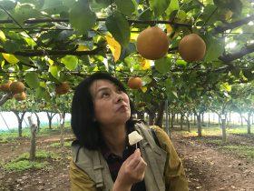 梨狩り-紅葉を走るわたらせ渓谷トロッコと富弘美術館-はとバスの旅