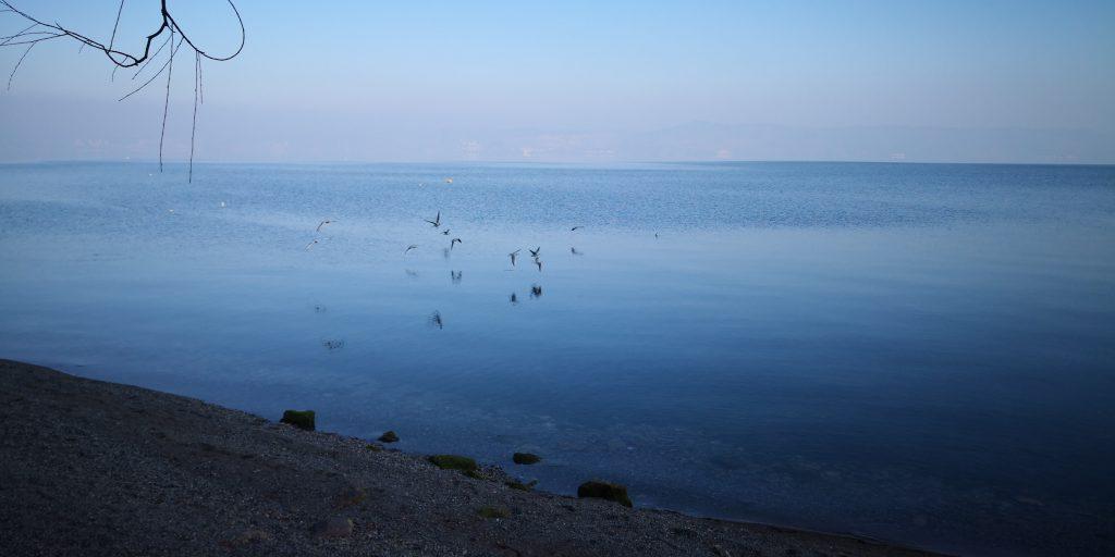 撫仙湖の鷗-玉溪市-雲南省-写真提供:陳英