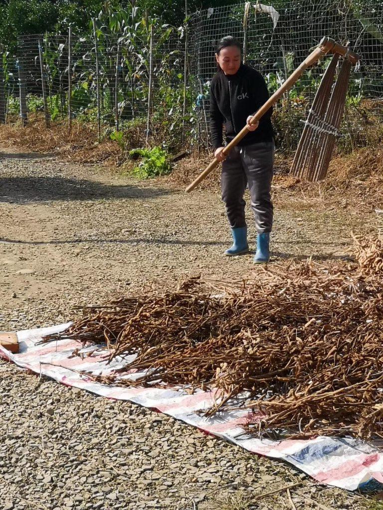 鉄牛寨林盤-蒲江県-成都市-四川省-撮影:夏暉