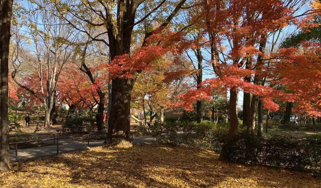 初冬の石神井公園-練馬区-東京都