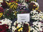 ヴェルサイユとなりの花店-2018年10月-パリ郊外-フランス