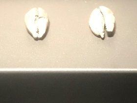 海貝-二号祭祀坑-総合館-三星堆博物館-広漢市-徳陽市-四川省