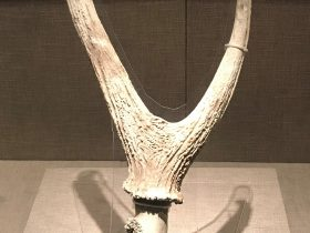 鹿角-先秦時代-常設展F2-成都博物館