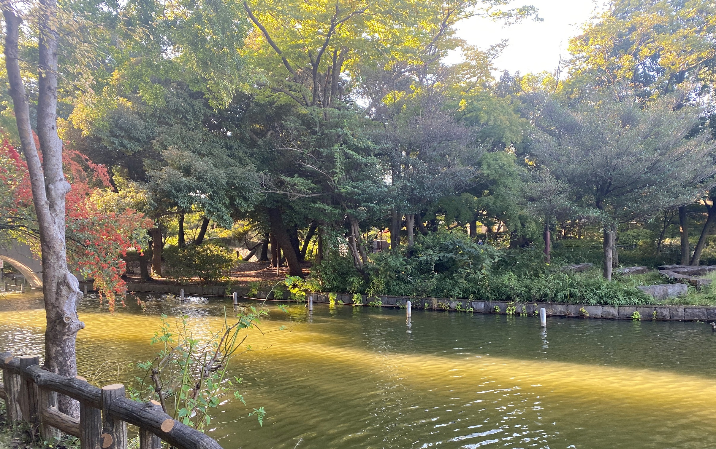 都立石神井公園-練馬区-東京-2020年10月20日-撮影:iPhone 11 Pro