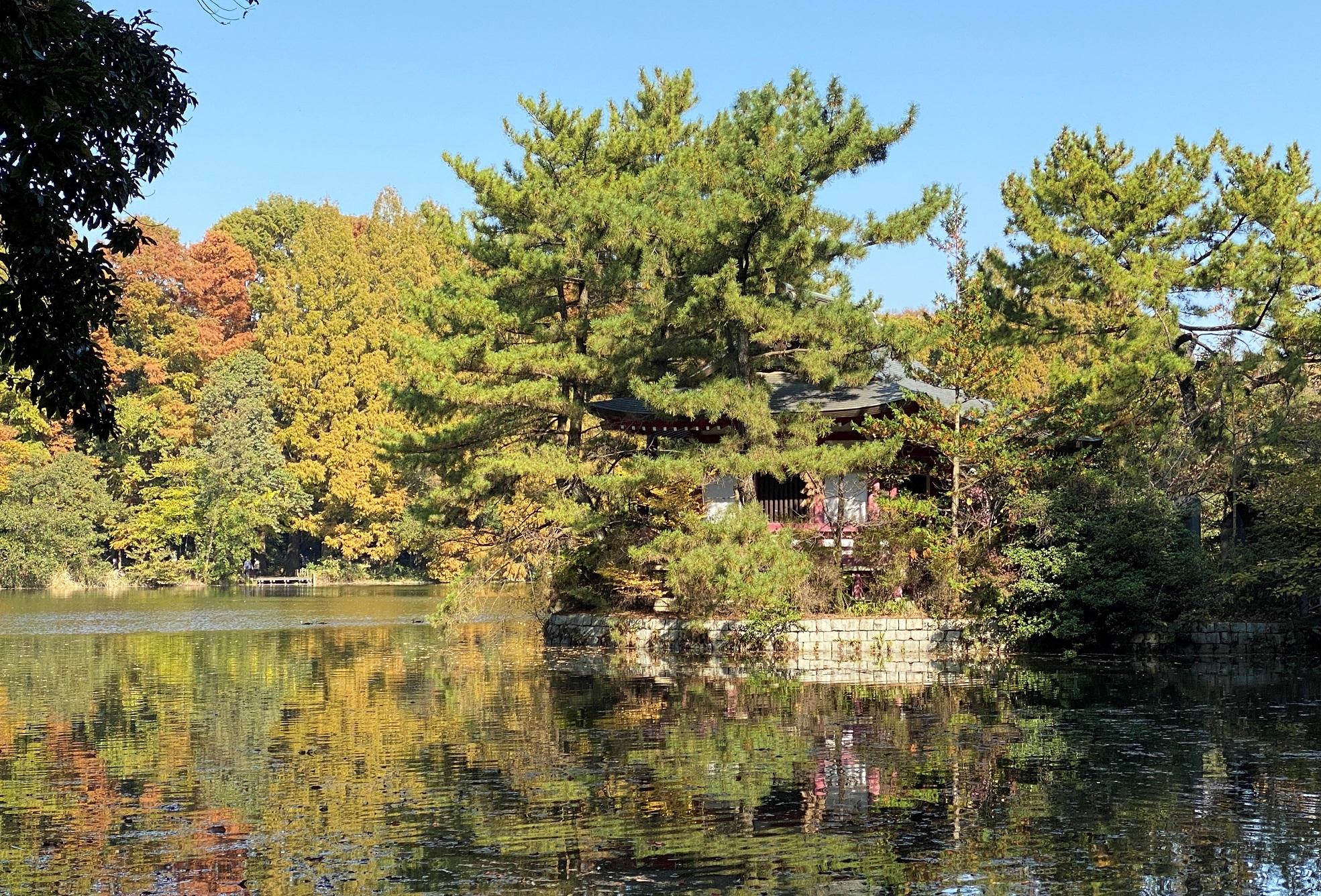 三宝寺池-都立石神井公園-練馬区-東京-撮影:iPhone 11 Pro