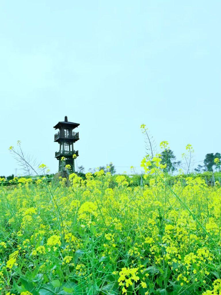 明月村の春:撮影 張妮-四川成都浦江県