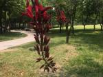 2019年5月23日金沙考古遺跡公園-金沙遺跡博物館-四川成都