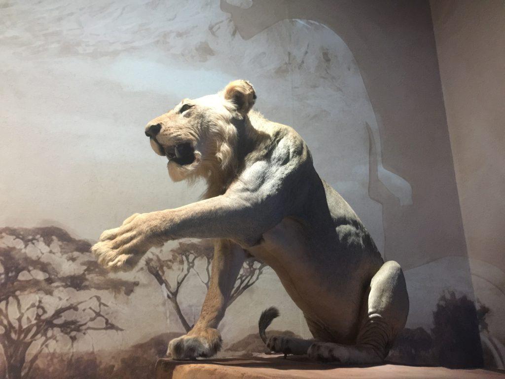 ワイルドのアフリカ-人間と自然-ベリン寄贈展-成都博物館