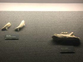 虎犬歯-虎左下頜骨-展示ホール1-昔日の郷里-金沙遺跡博物館-成都市