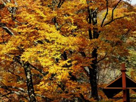 紅葉-光霧山-諾水河国家地質公園-米倉山-巴中市-四川省-撮影:張萍