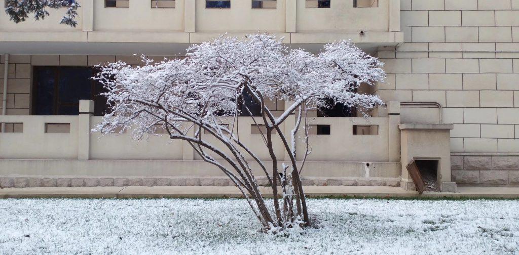 北京の初雪-撮影: 李海鷹