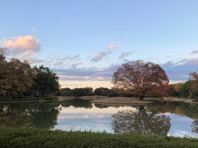 水鳥の池-国営昭和記念公園-立川市-東京